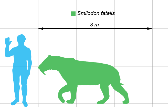 Smilodon_Height.png