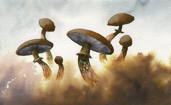 roper-mushrooms-fog.jpg