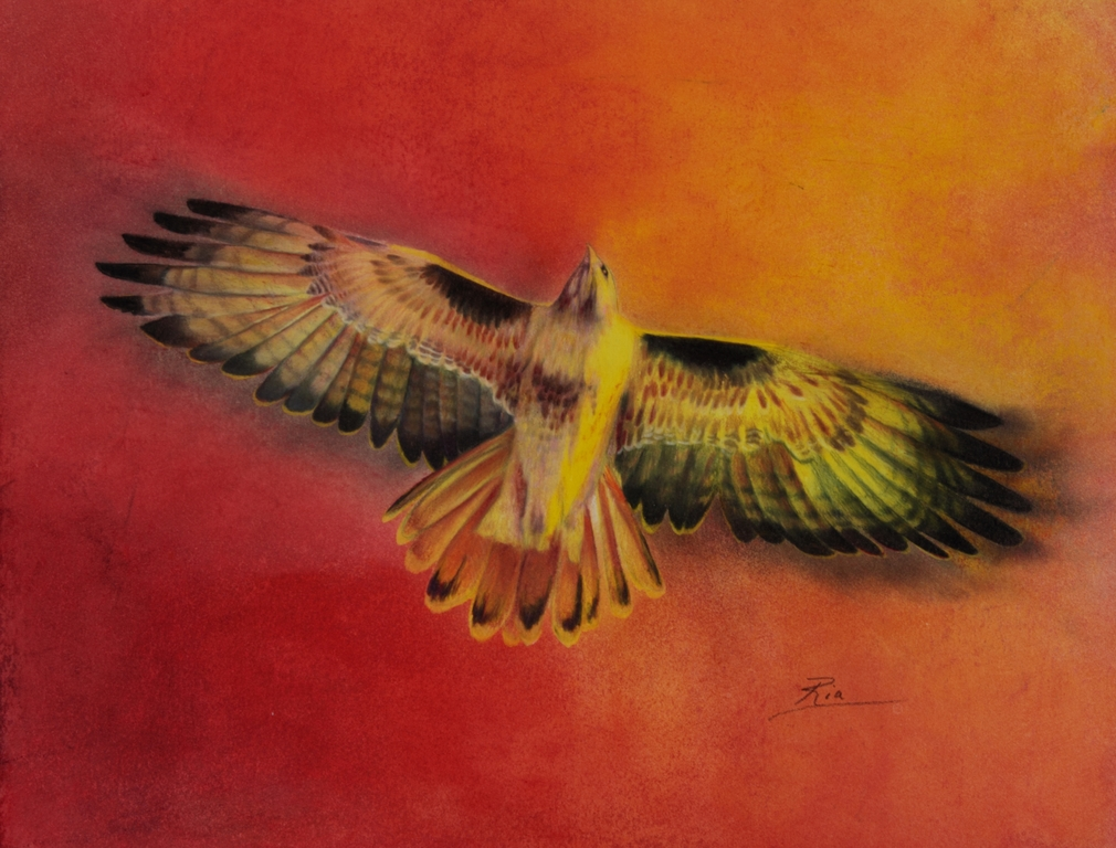 spirit-hawk-resized.jpg