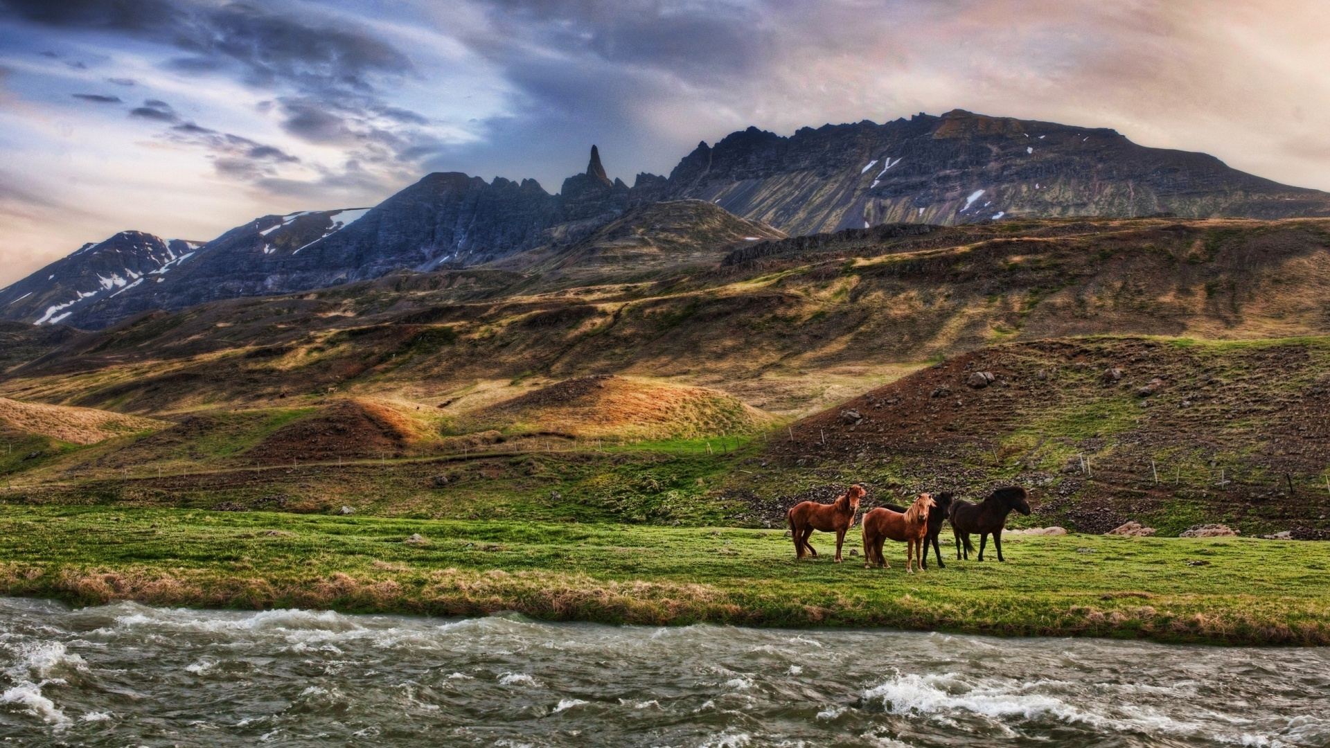 horsesmaybe.jpg