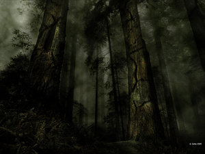 Dark_Forest_by_Zettto.jpg
