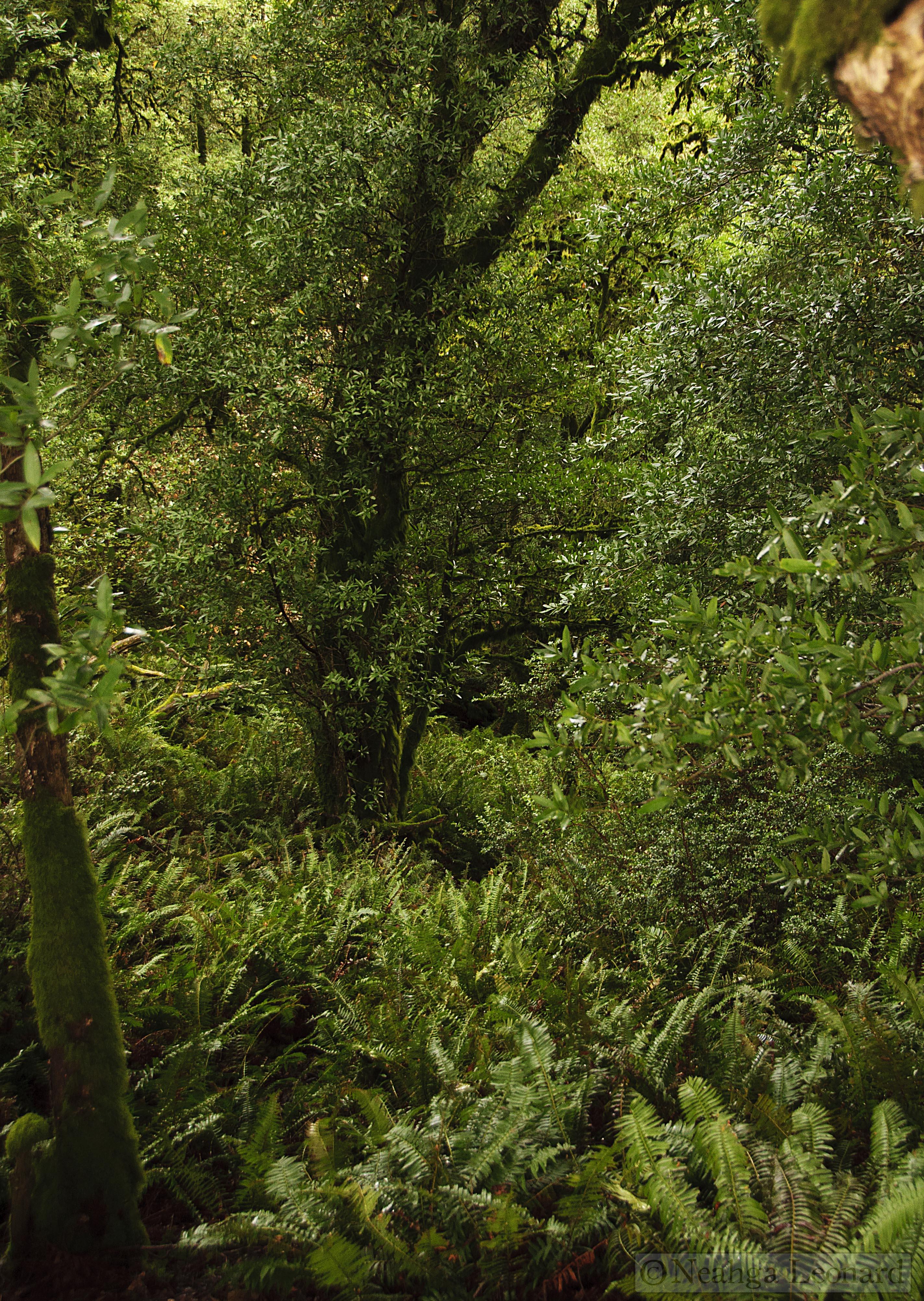 denseforest.jpg