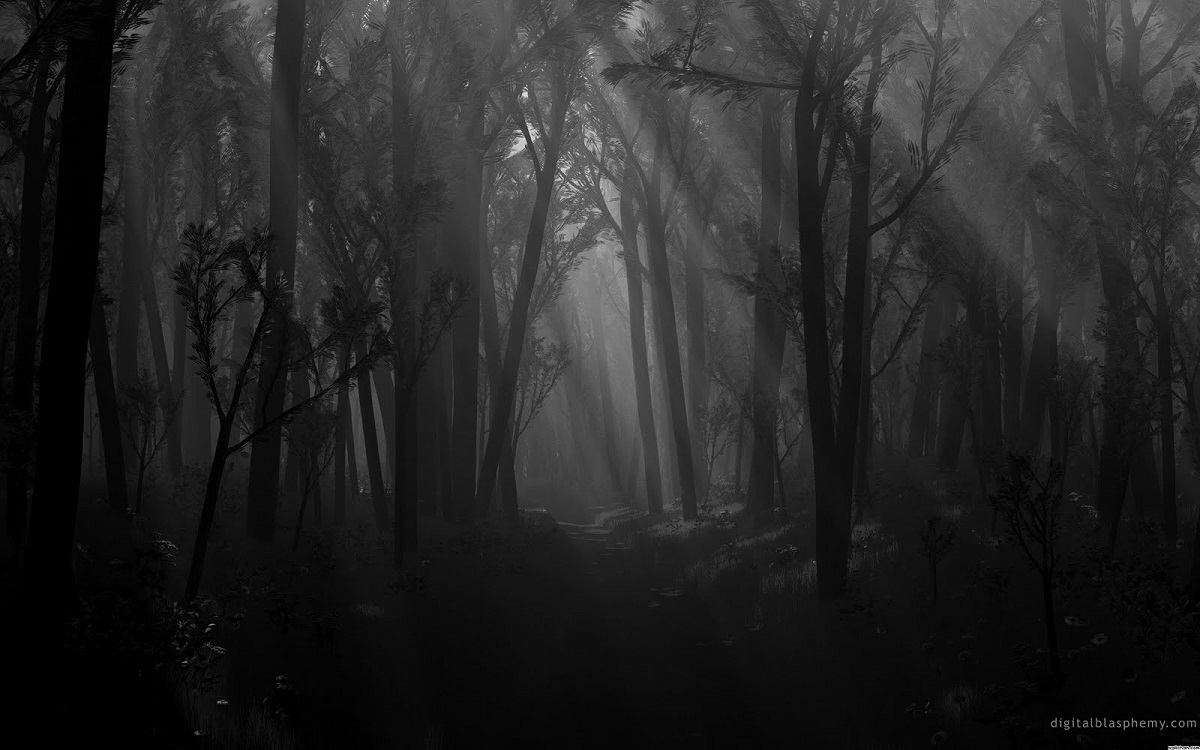 spooky-forest-image-for-the-grove-from-digital-blasphemy-dot-com.jpg