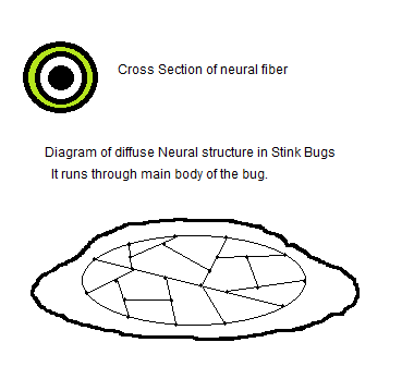 Stink_bug_diagram.png