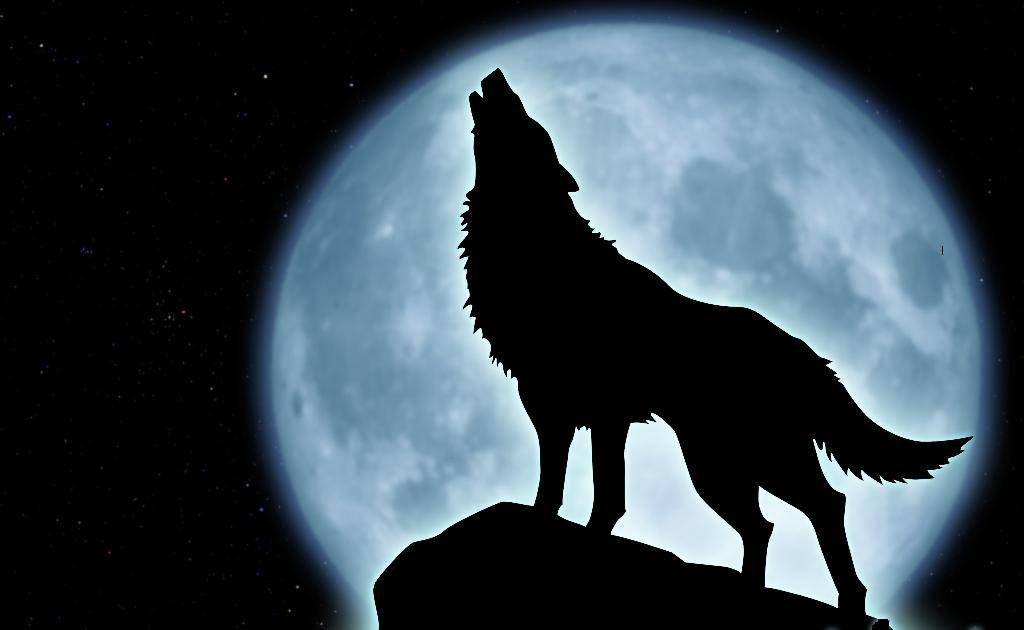 wolf-howling-silhouette-sitting.jpg