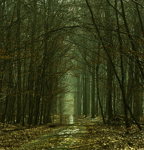 38-dead-leaves-tree-forest-scary.jpg