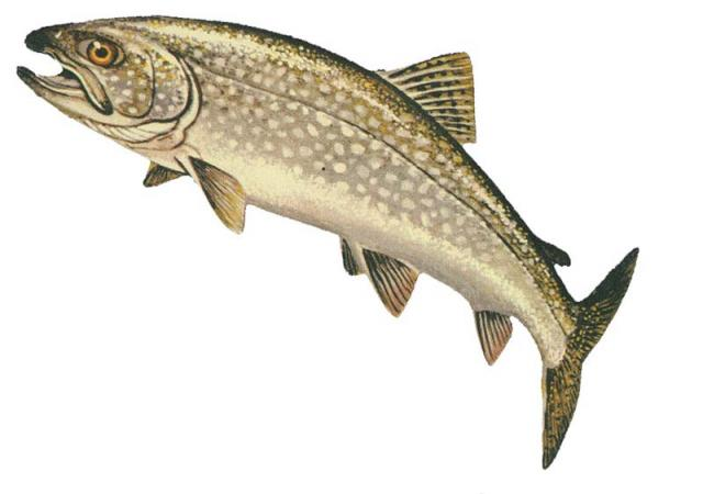 lake_trout_glerl_w640.jpeg