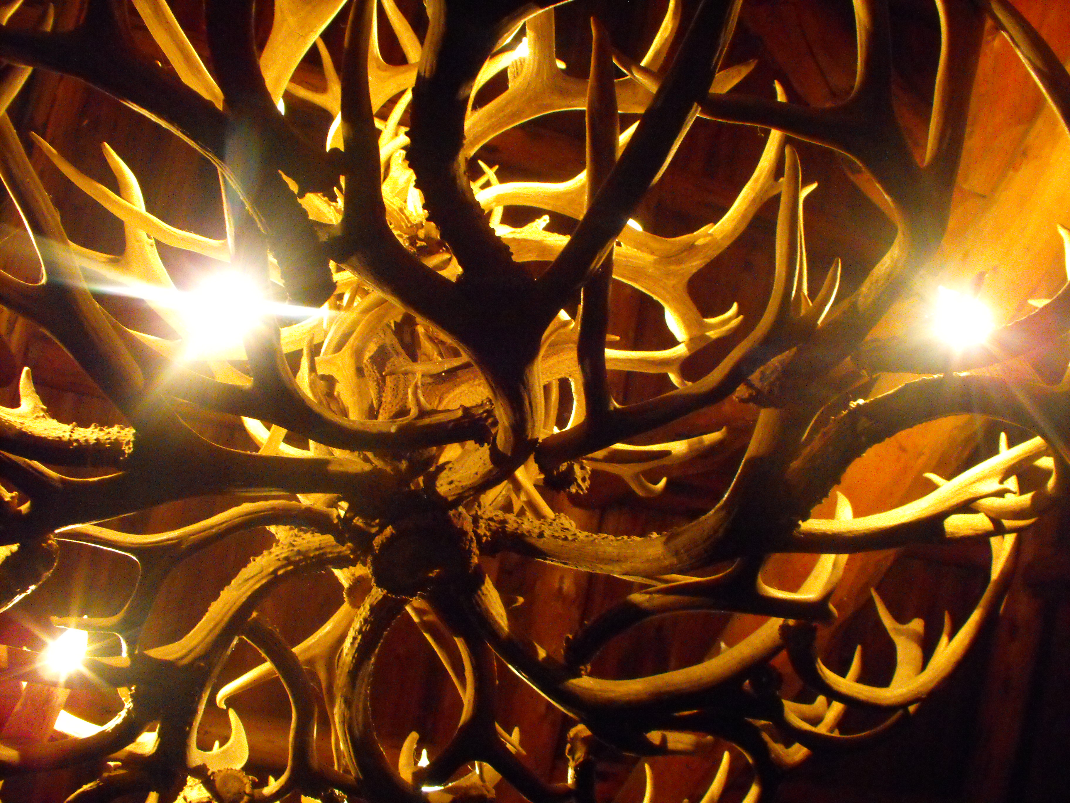 antler_chandelier_by_bluegrrl87-d49rudj.jpg
