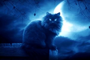 fantasy-catalog-wallpapers-outlines-silhouette-cat-black-moon-night-image.jpg