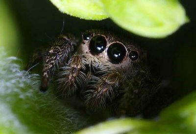 tumblr_static_cute_animals_spiders__17_.jpg