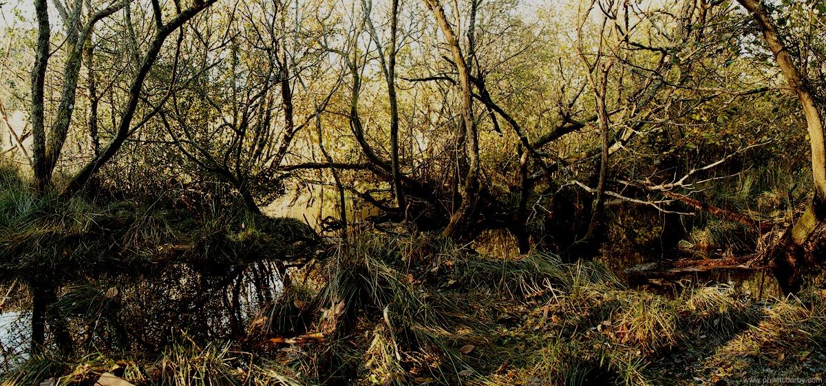 Sore_Swamps.jpg