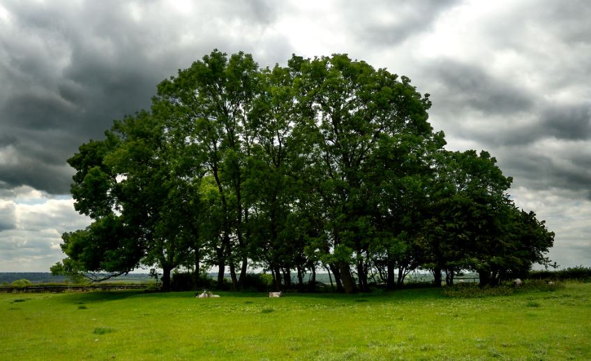 Cotonwood_Trees.JPG