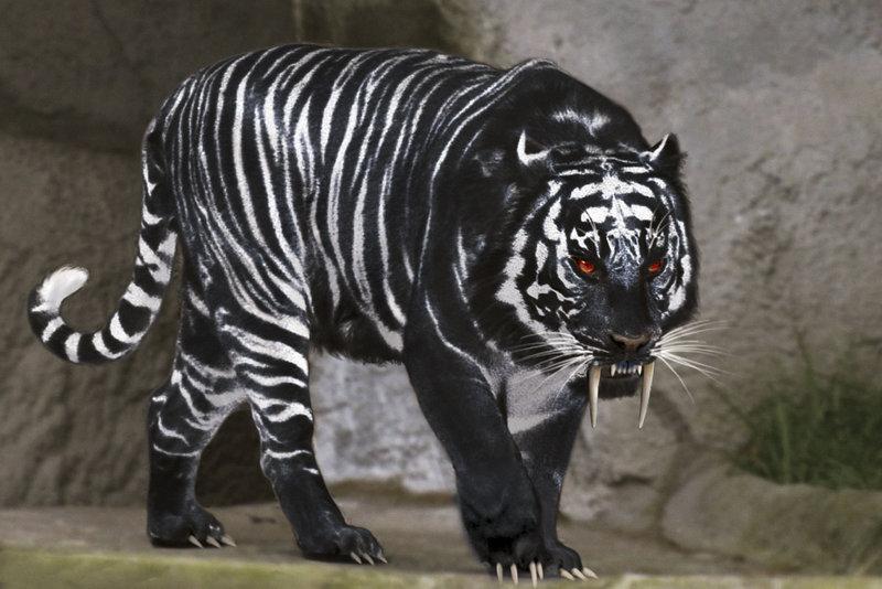 Black_Tiger.jpg