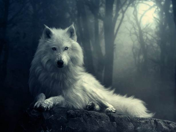white-wolf-wallpaper-2.jpg