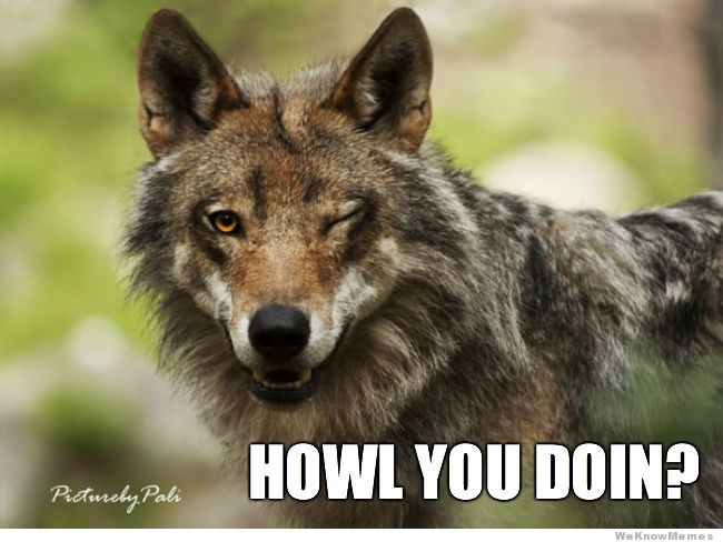 ridiciulously-photogenic-wolf-meme.jpg