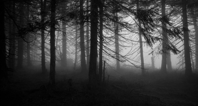 haunted-forests.jpg