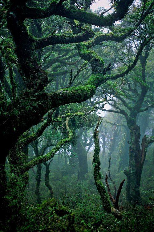 Arrowfell_Woods.jpg
