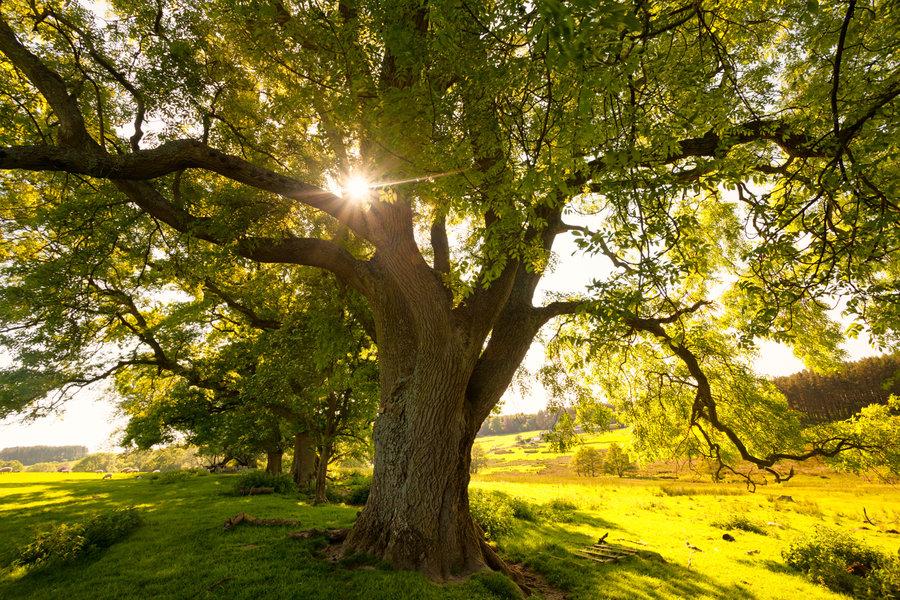 summer_trees_by_scotto-d6aek9m.jpg