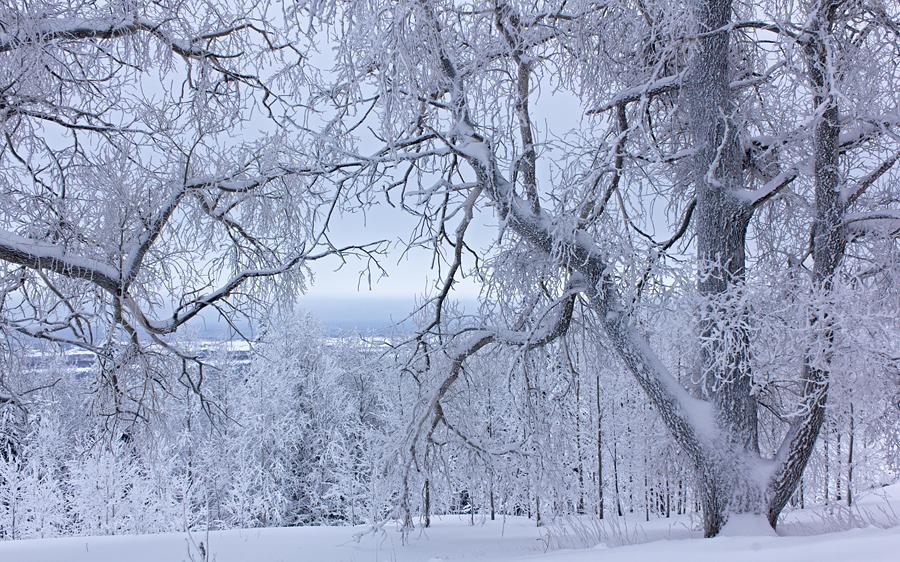 snow_white_trees_by_deingel-d3dk9bw.jpg