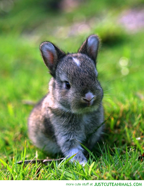 cute-animals-baby-bunny-rabbit-pics.jpg