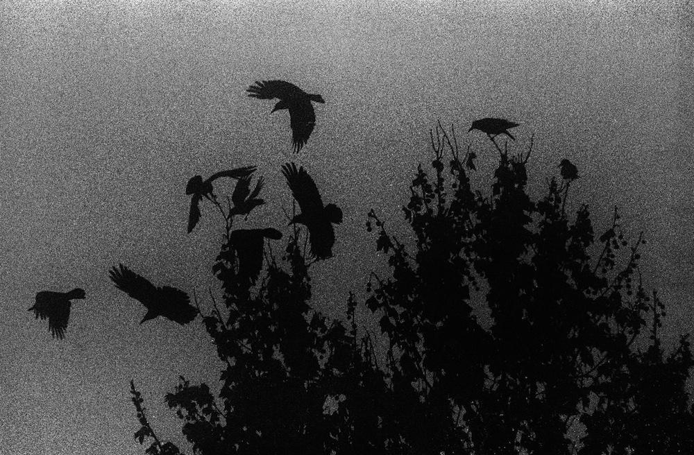 Fog_Ravens.jpg