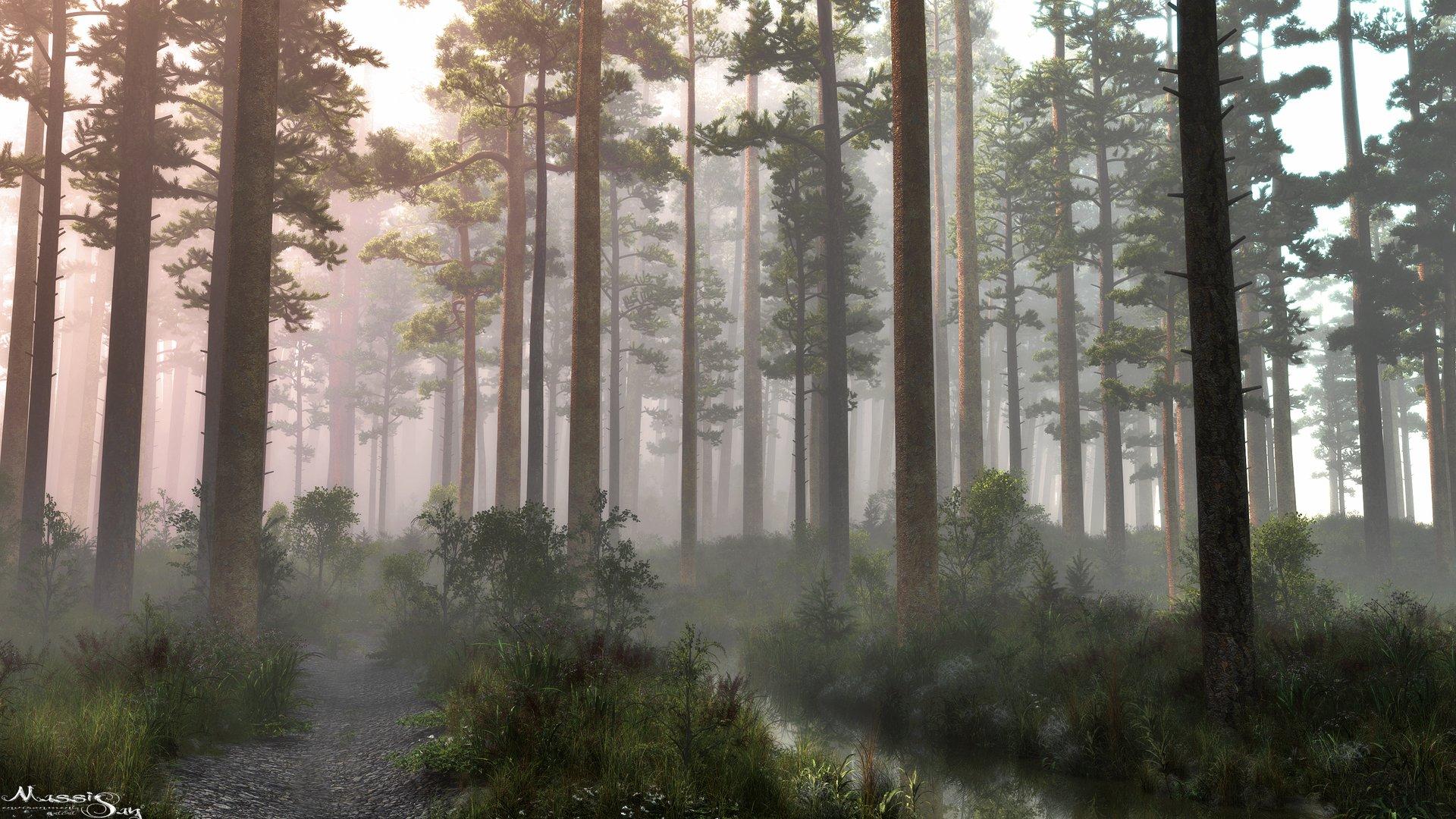 Serani_Forest.jpg