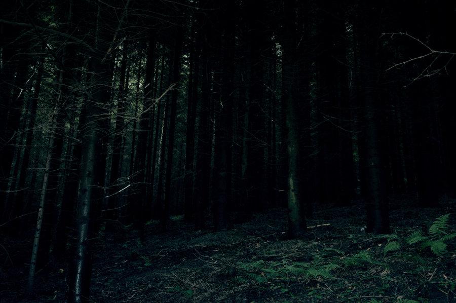 Chapter_1_-_Dark_Forest.jpg