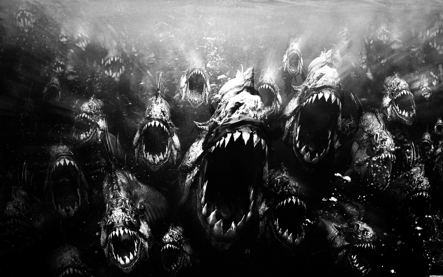 scary-piranha-piranhas-swarm-wallpaper.jpg