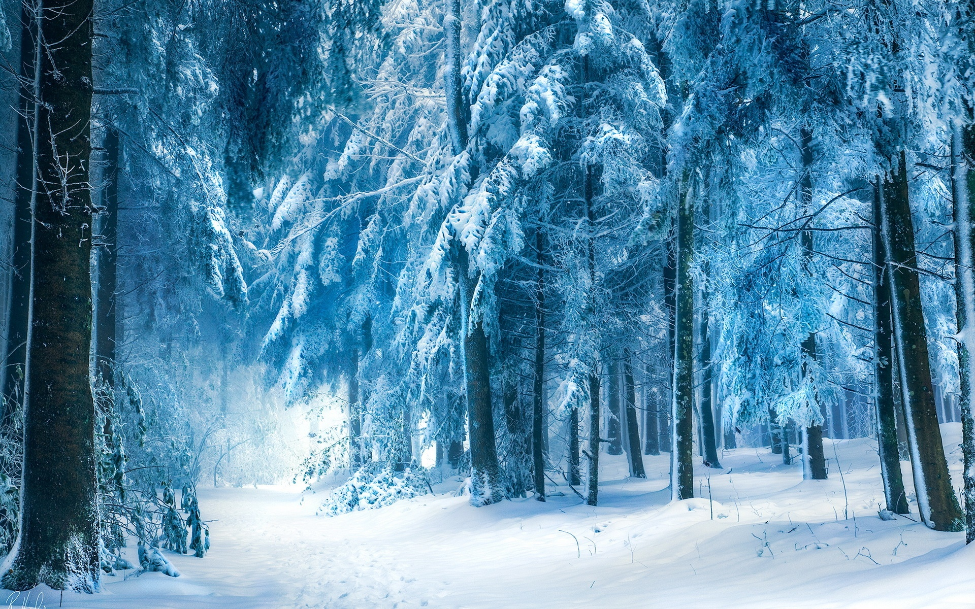 Wallpaper-Winter-landscape-snow-forest.jpg