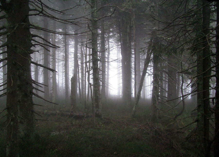 Spooky_forest_by_ktostam.jpg