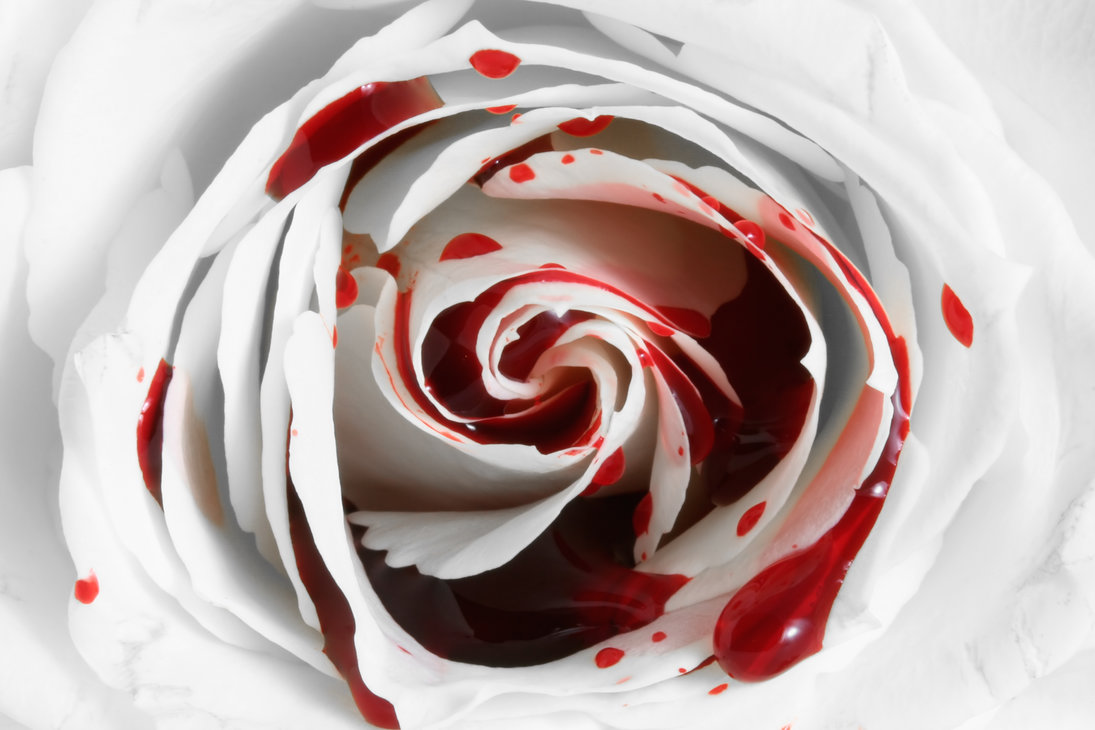 bleeding_rose___free_high_res_stock_by_somadjinn-d7usfp5.jpg