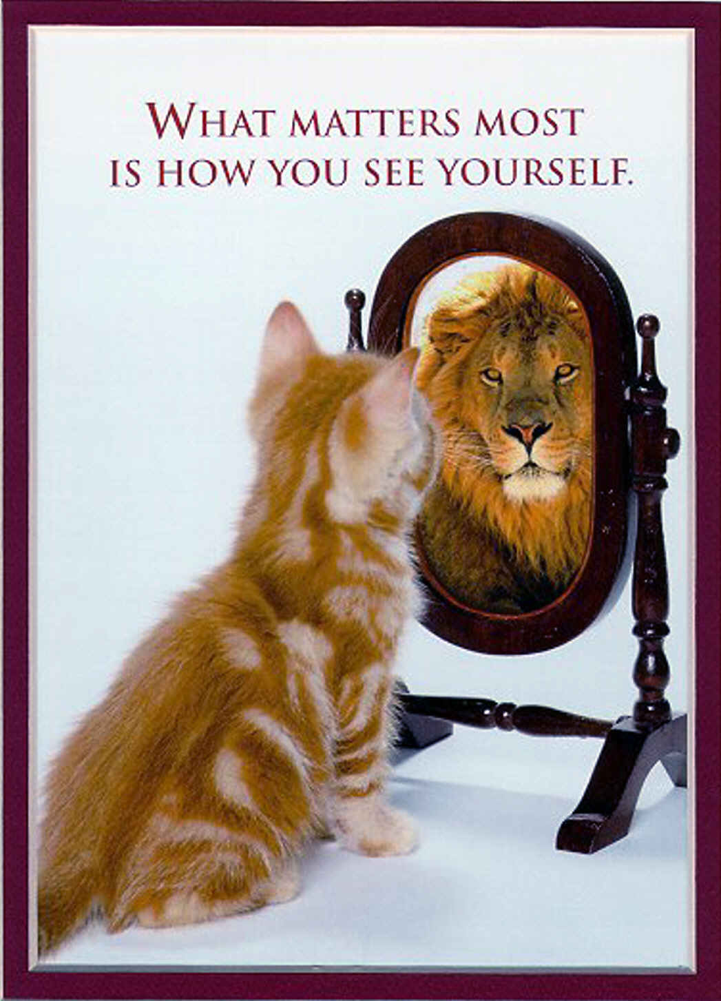 mirror_cat_as_lion1.jpg