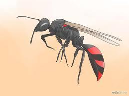 Ethear_Wasp.jpg