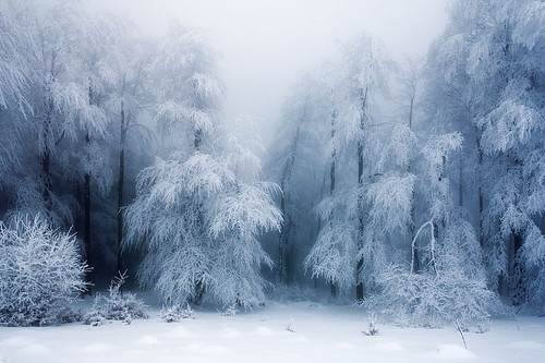 Threga_Forest_Frozen.jpg
