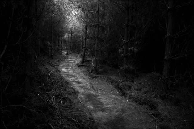 dense_and_gloomy_these_forests_make_a_scary_sight_640_50.jpg