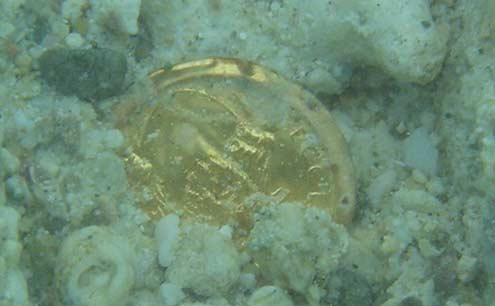 gold-coin-found-underwater-detecting.jpg
