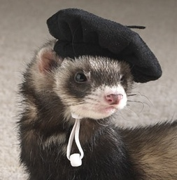 Thefrenchferret