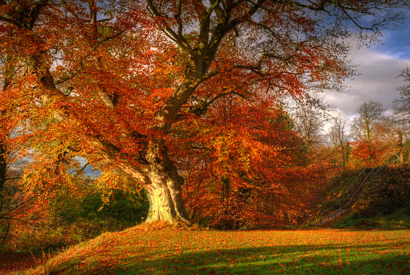 Autumn_in_Belvoir_Forest_by_Gerard1972.jpg