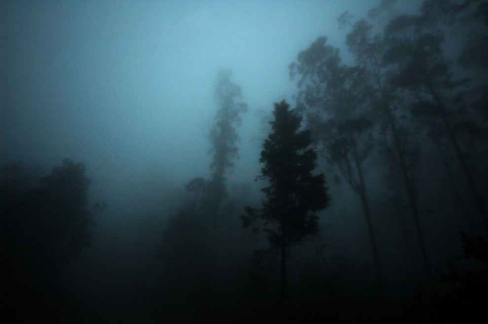 Shadows-in-the-gloomy-mist-of-a-haunted-forest.jpg
