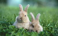 bunnies-chinese-new-year-28478085-1920-1200.jpg