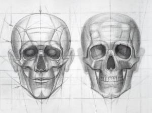 Human-Skull-Stages-of-drawing-construction-detail-I_oeuvre_grand.jpg