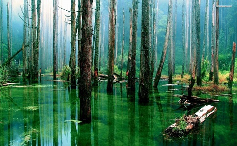 flooded-forest-tree-nature-1920x1080-wallpaper347748.jpg