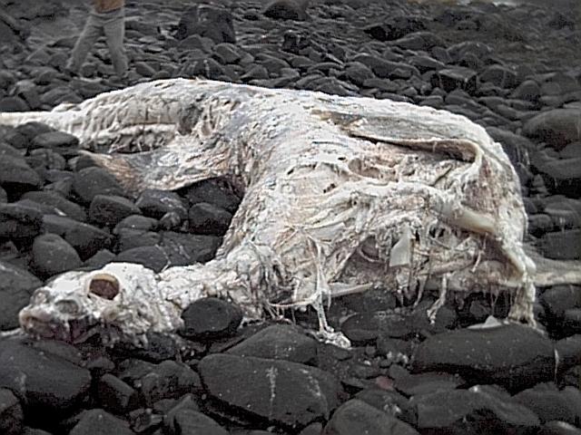PseudoPlesiosaur_Carcass.jpg