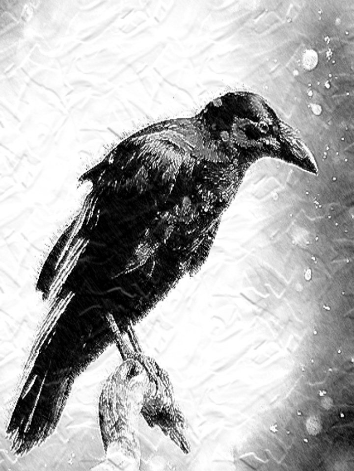 Stately_raven.jpg
