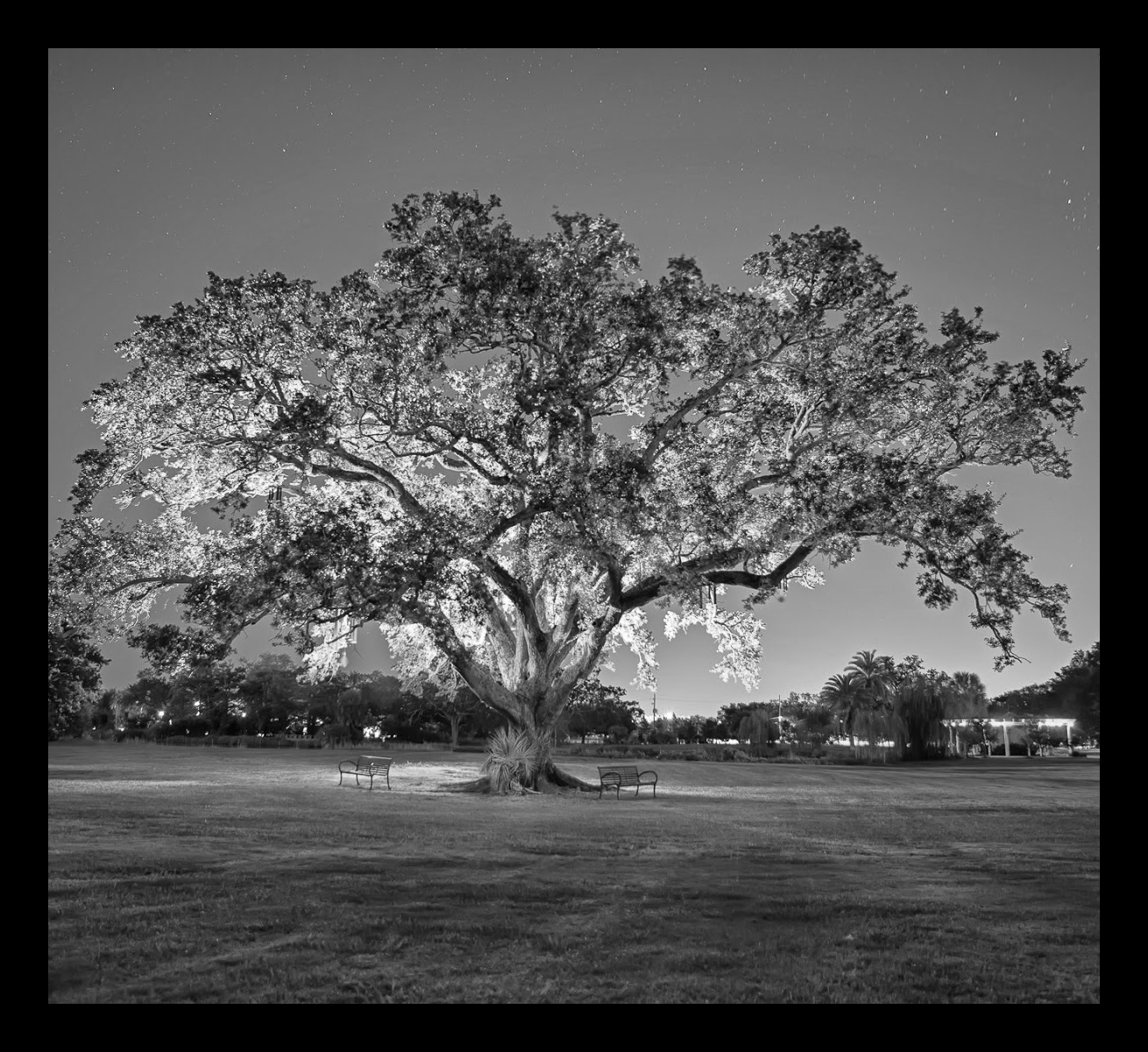 Tree_Of_Life_Small.jpg