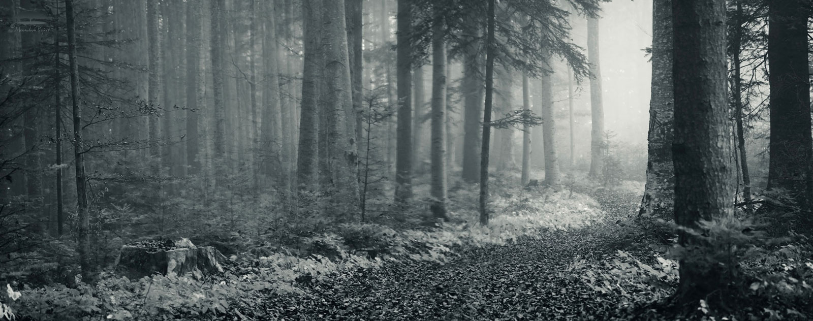 Forestroad in fog