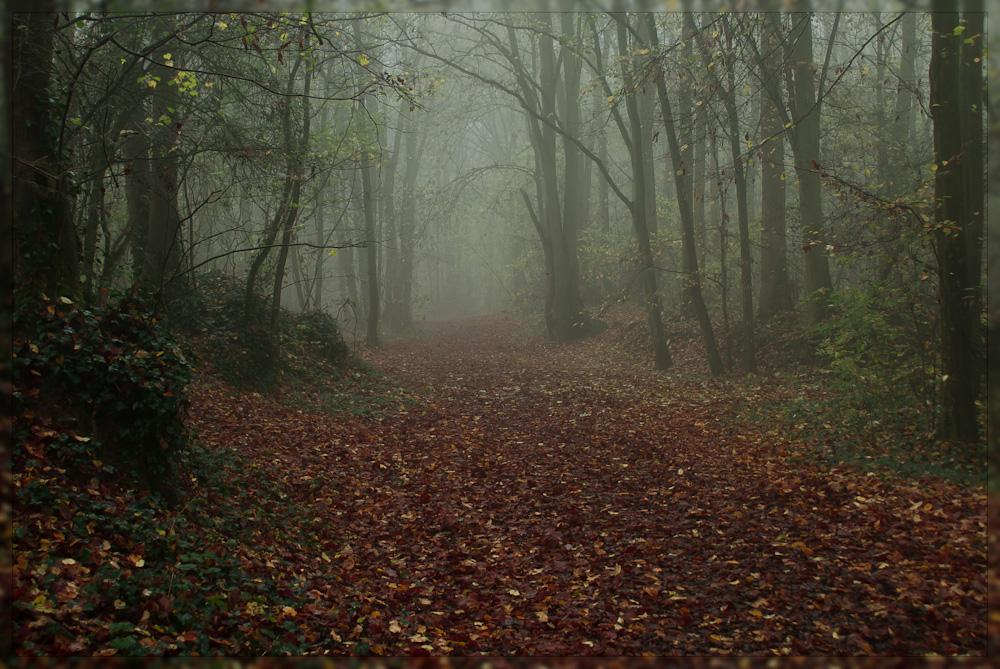 foggy_forest_by_exeral-d4gybt4.jpg