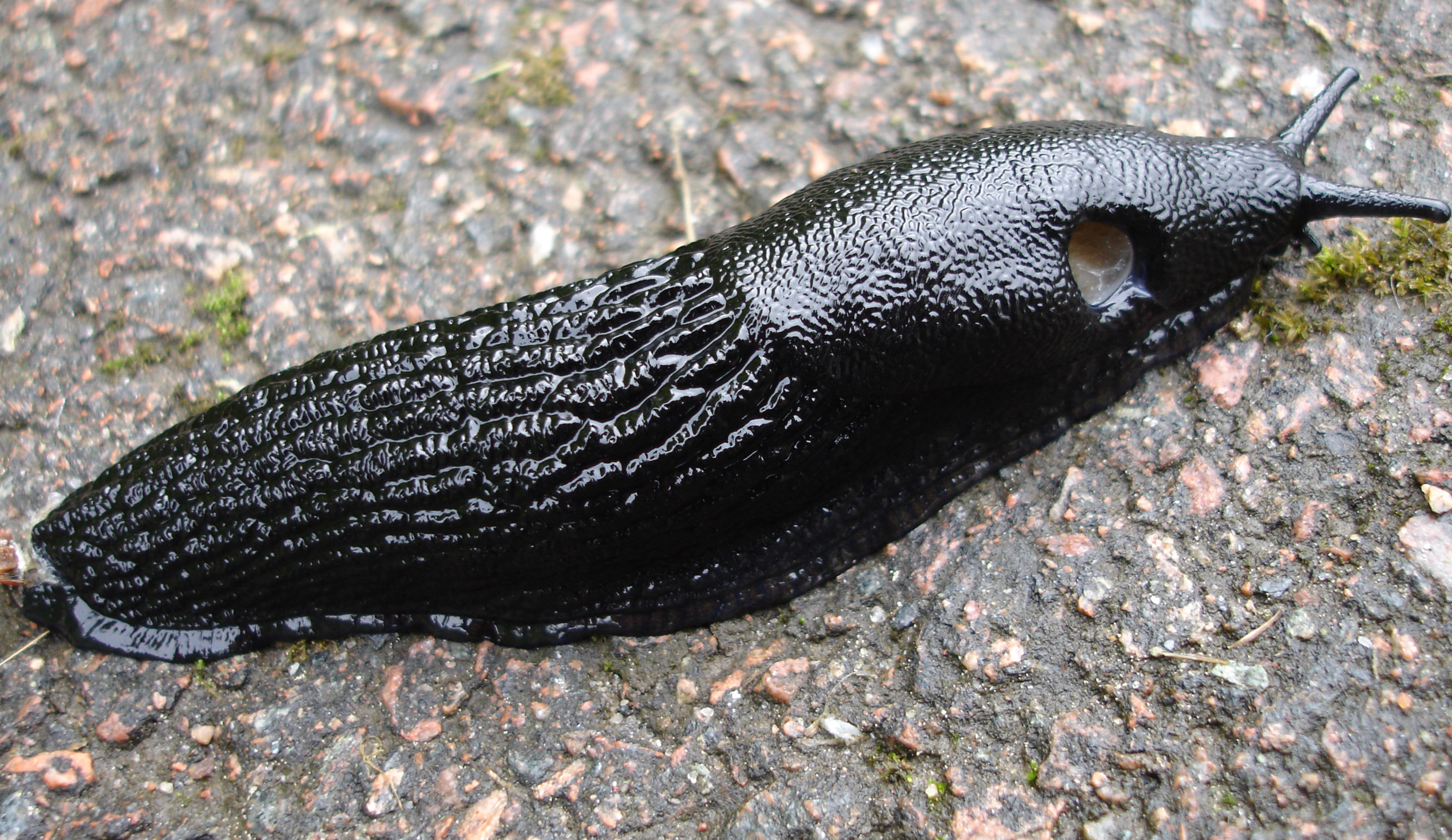 Slug_crop-aspect.jpg