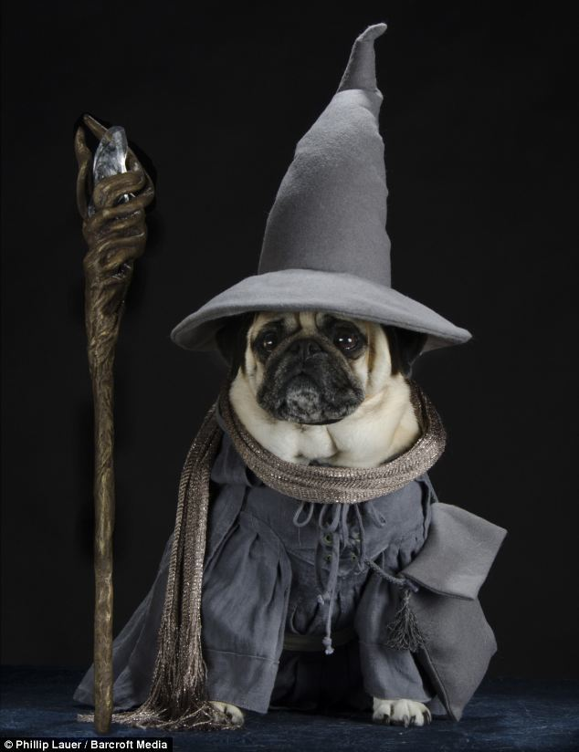 pug_wizard.jpg