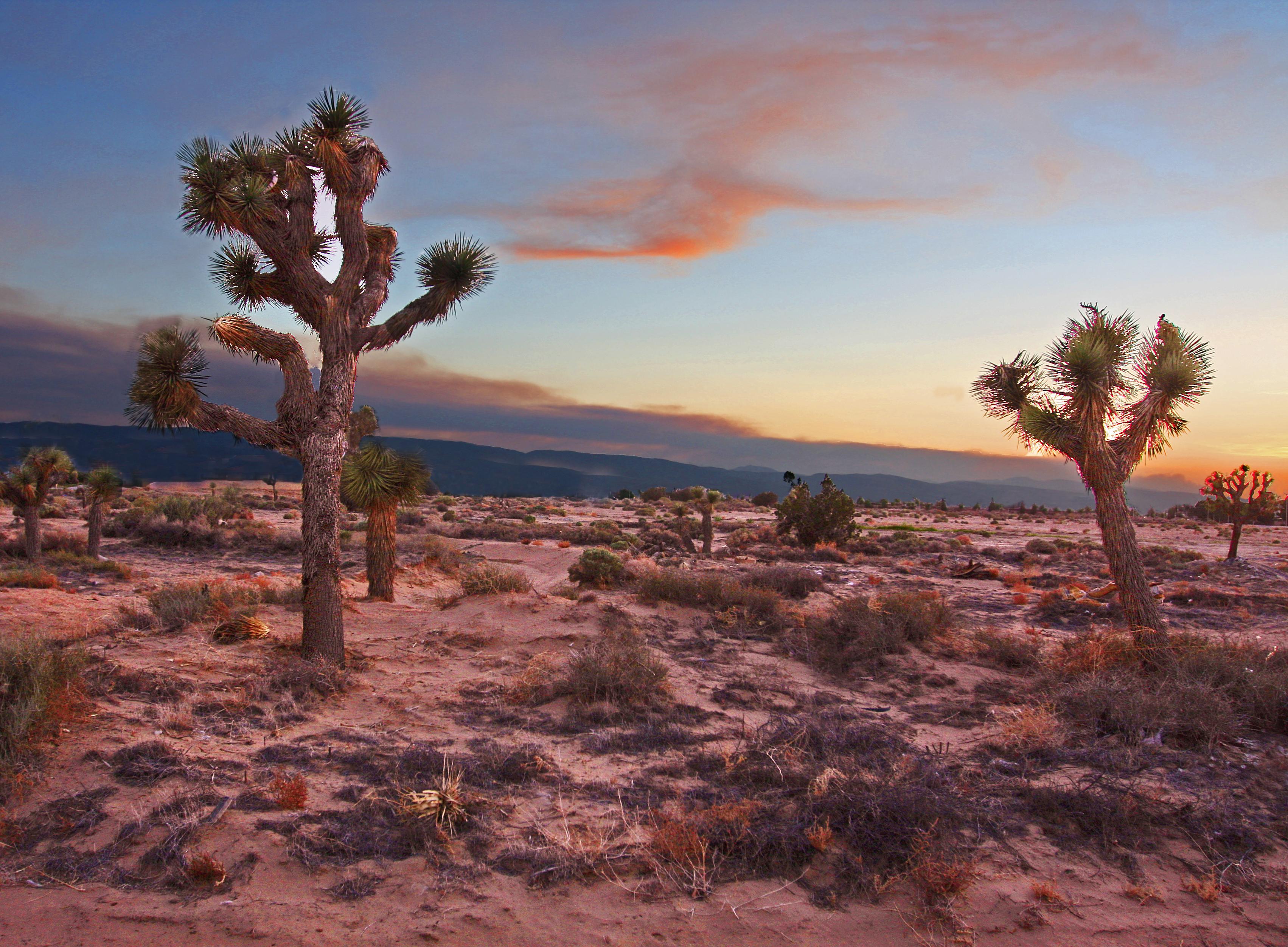 Mojave_Desert_at_Dusk__8752735982_.jpg